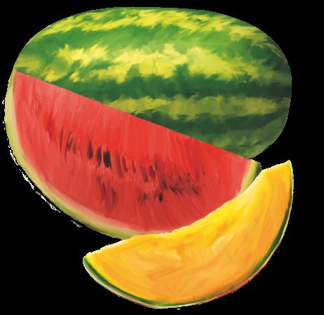 cocomero-melone-pallavicino-aurelio-azienda-agricola