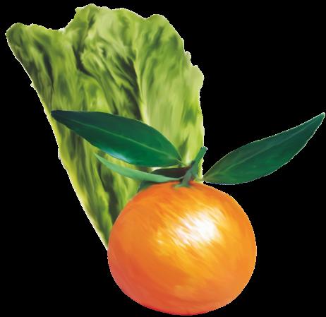 insalata-mandarini-agriessenza