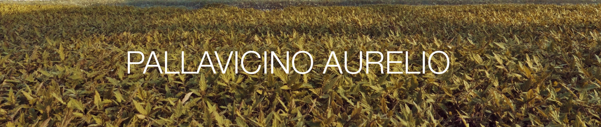 intestazione-pallavicino-aurelio-azienda-agricola