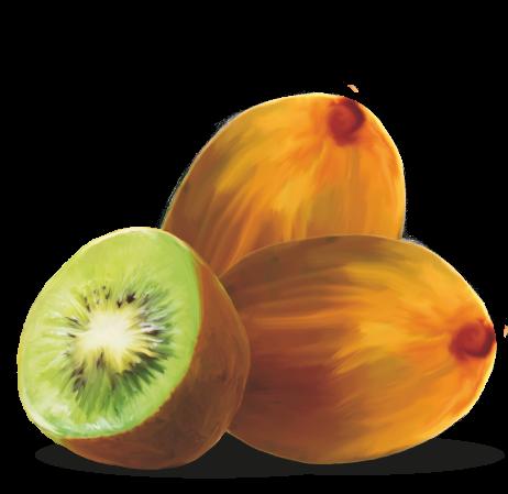 kiwi-radici-di-vita