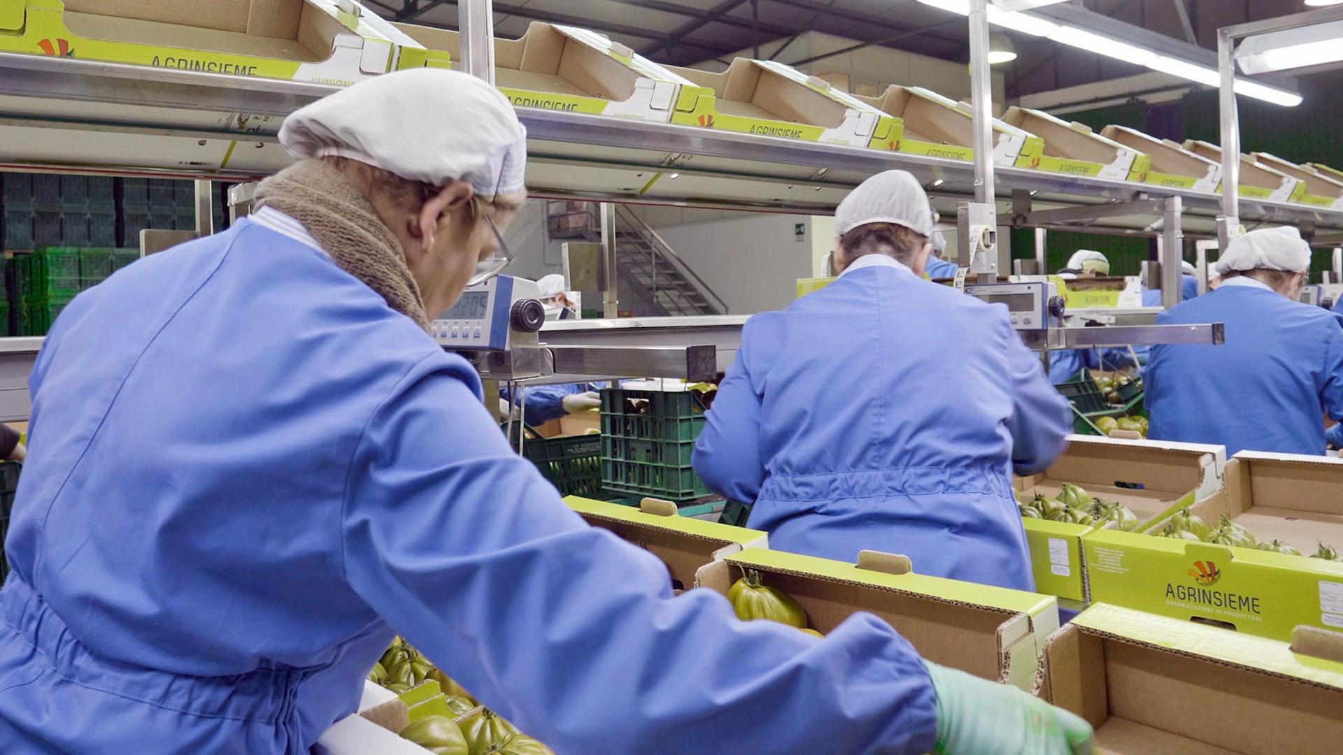 linea-di-produzione-agrinsieme.organizzazione-produttori