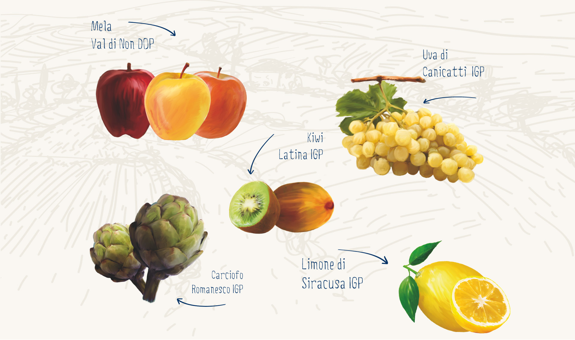 produzione-frutta-larga-scala-organizzazione-produttori-agrinsieme