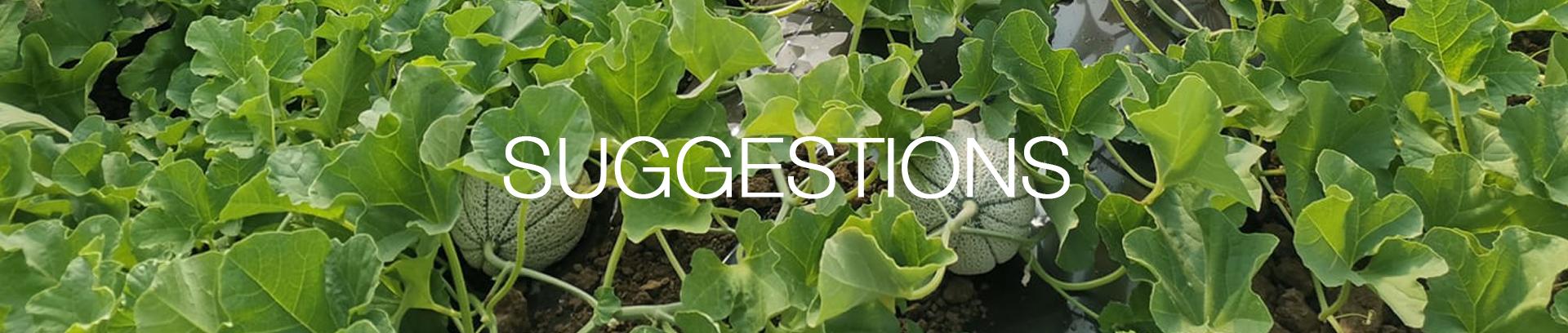 intestazione-suggestions-agroama-oranizzazione-produttori